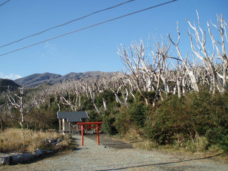 椎取(しいとり)神社