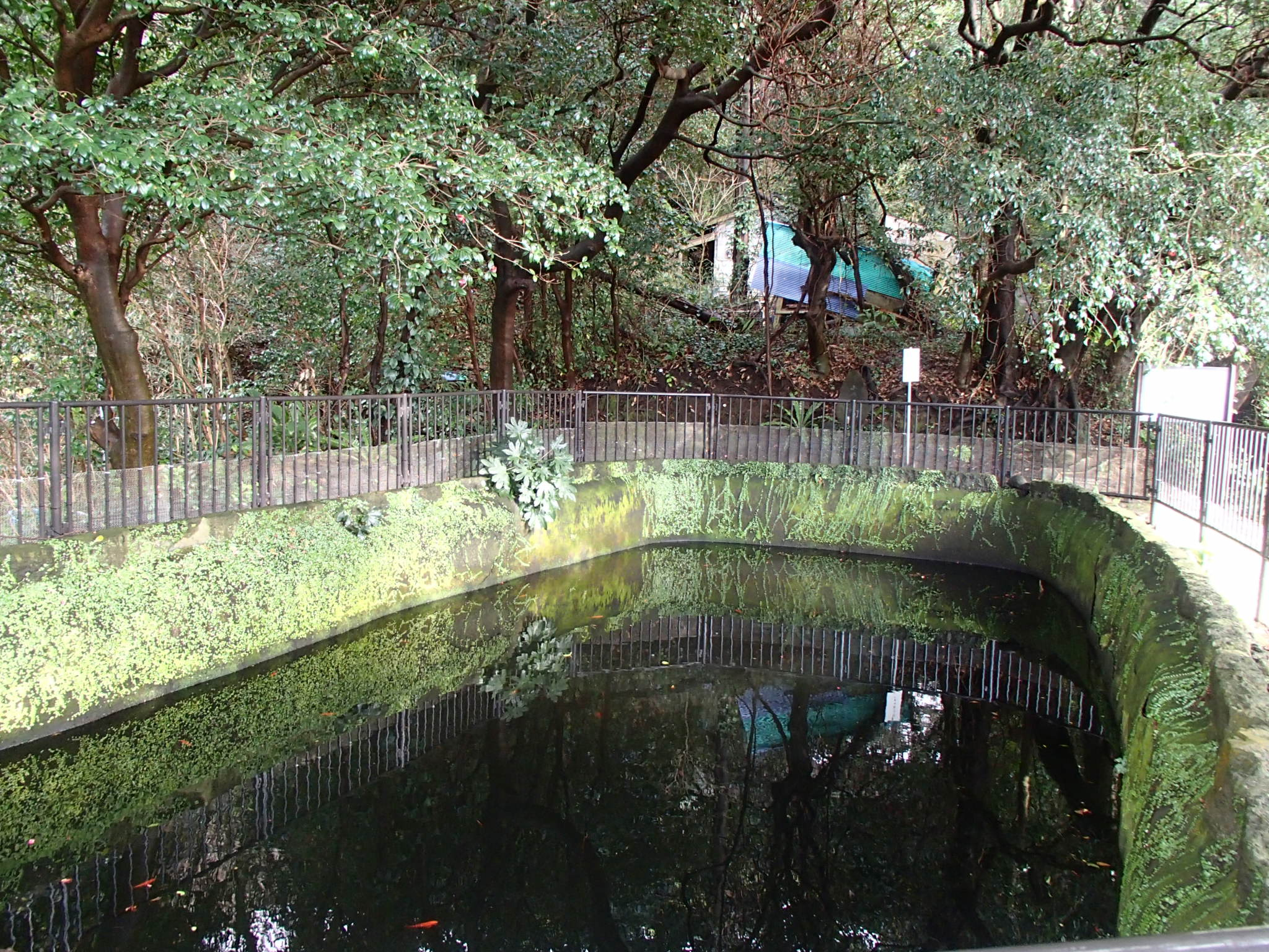小金井小次郎の井戸