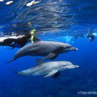 tdc_dolphin