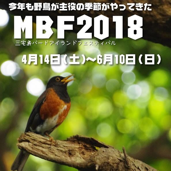 ■三宅島バードアイランドフェスティバル2018■