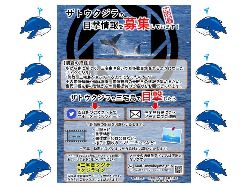 大募集!ザトウクジラの目撃情報!