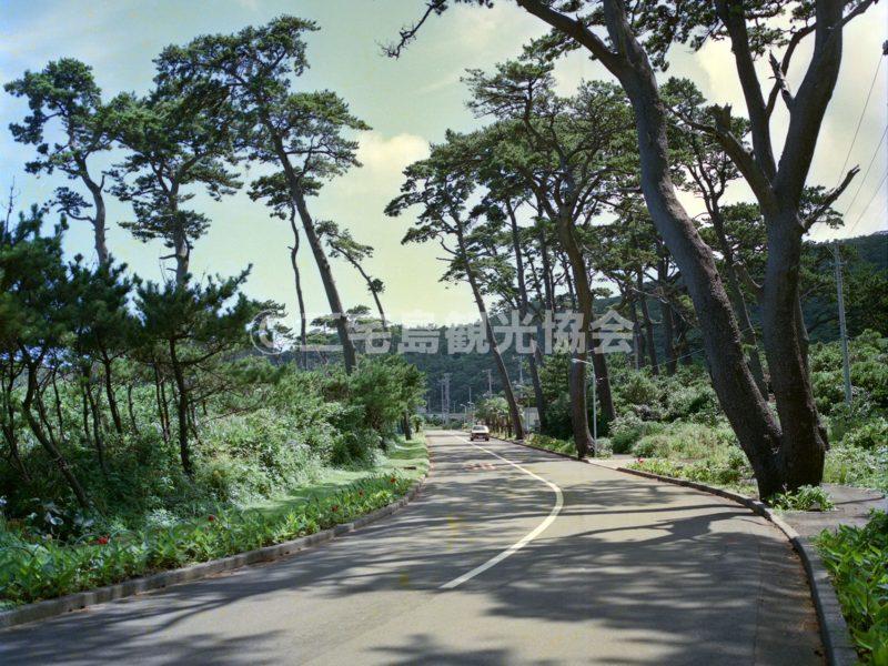 三池浜前の松並木