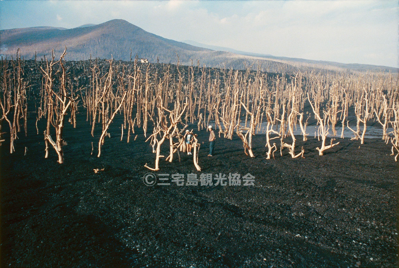【1983(昭和58)年噴火】 新澪池と立ち枯れ木