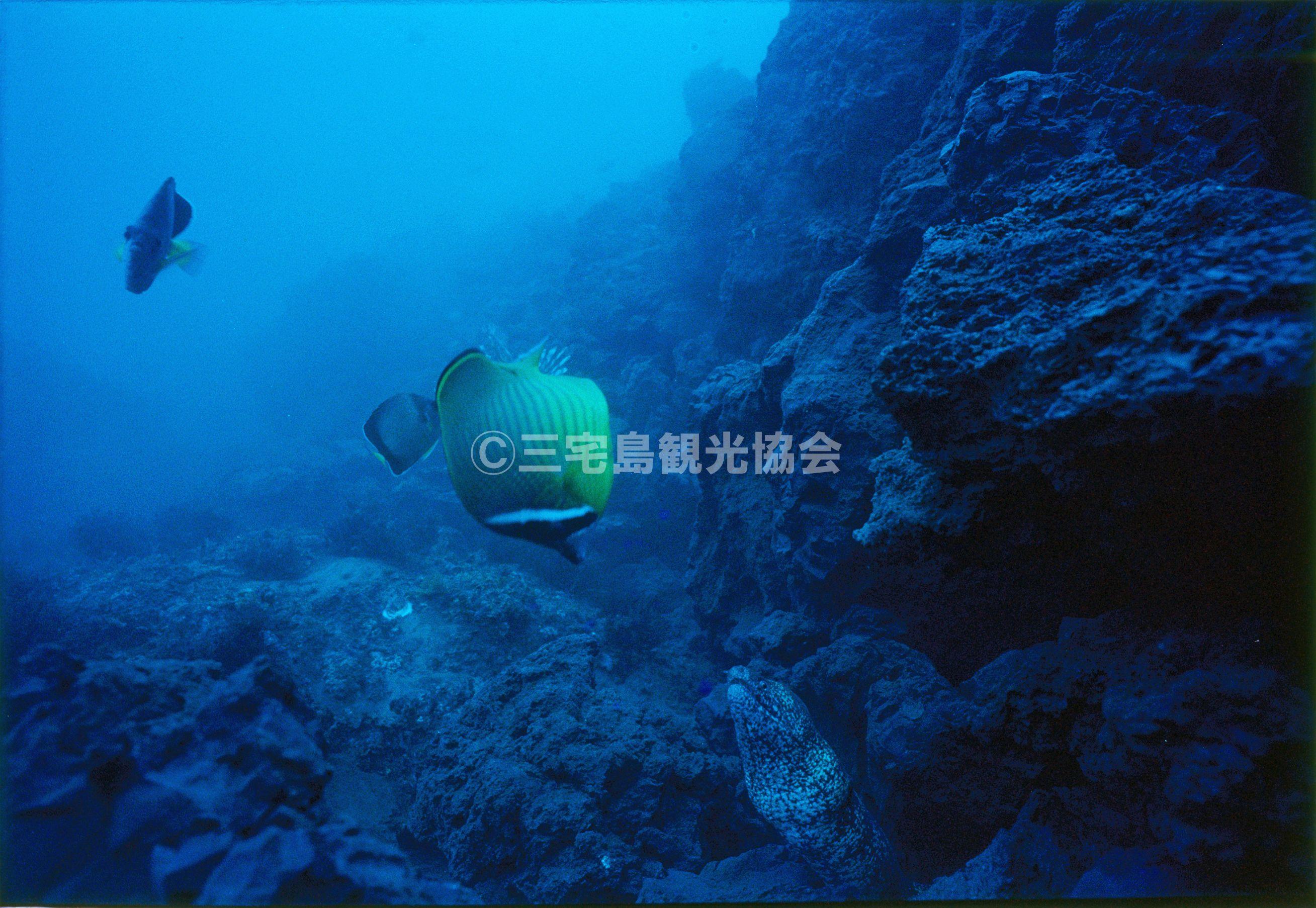 【1983(昭和58)年噴火】 海中に流れ込む溶岩