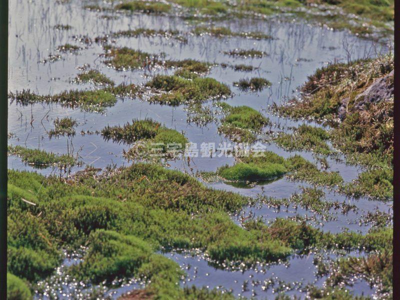 雄山・八丁平の湿地
